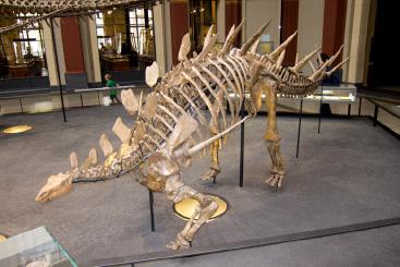 Stegosaurus - Wheel Walking
